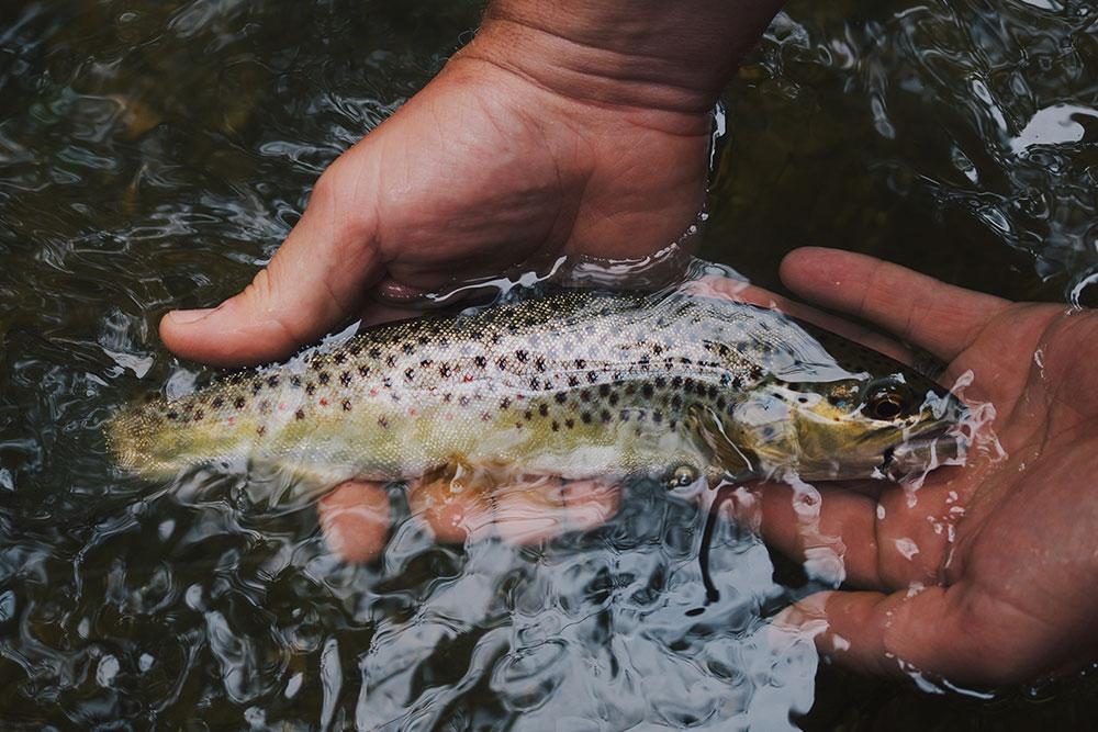 fishing northumberland